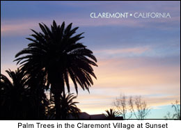 Photo Palms at Sunset in the Claremont Village